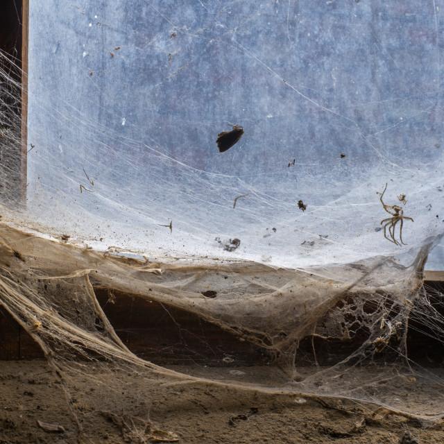 """""""painterly cobweb"""" stock image"""