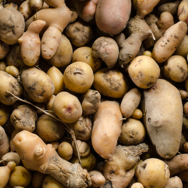 """organic potatoes"" stock image"