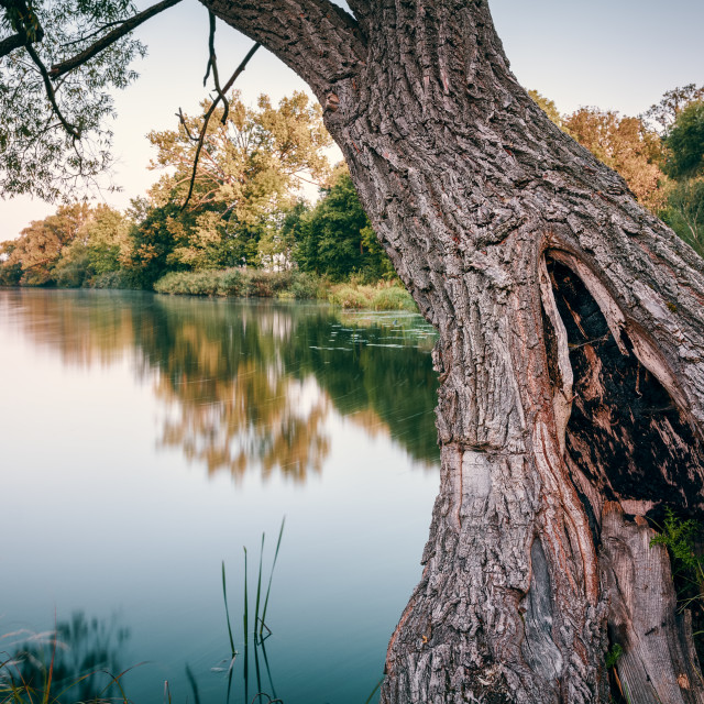 """Tree and river"" stock image"