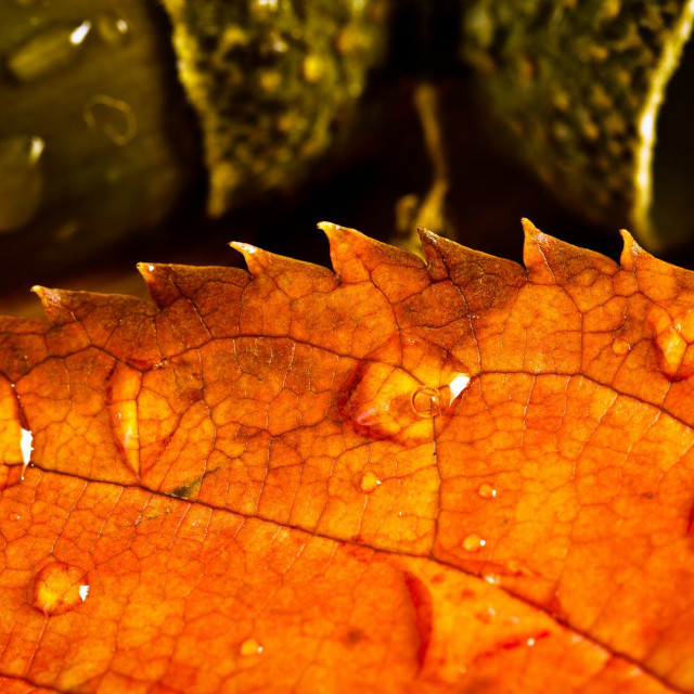 """""""Colours of Autumn"""" stock image"""