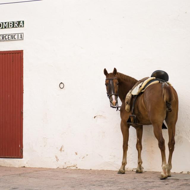 """Brown horse next to Bullring"" stock image"