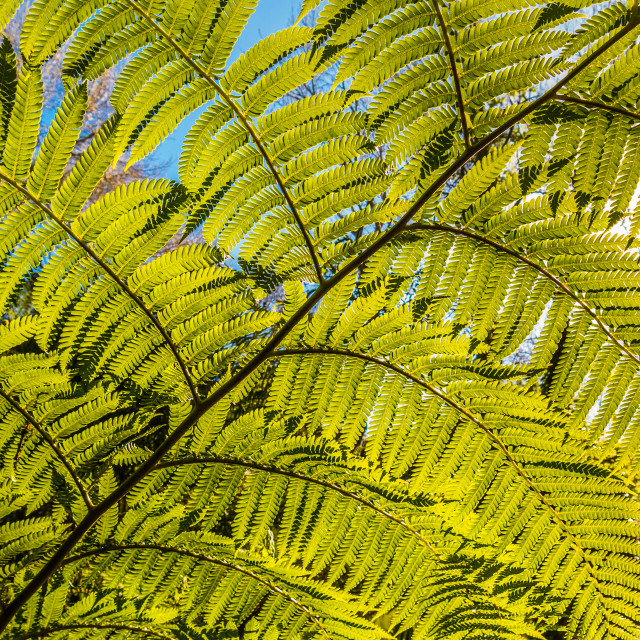 """Giant fern"" stock image"