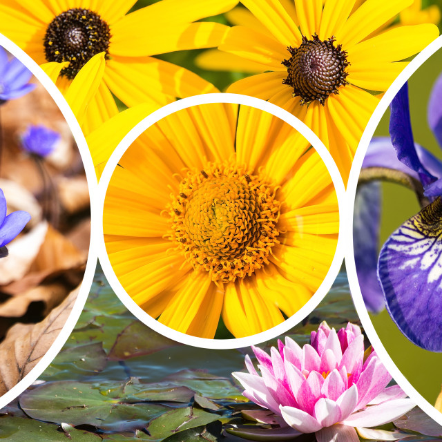"""""""Collage of flowers images"""" stock image"""