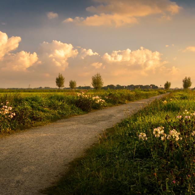 """Wild flowers in the Boterhuispolder, Leiderdorp, The Netherlands"" stock image"