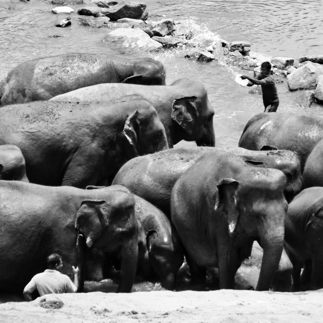 """Herd of Elephants"" stock image"