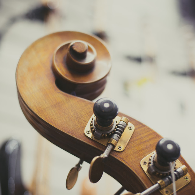 """Double bass headstock close up"" stock image"