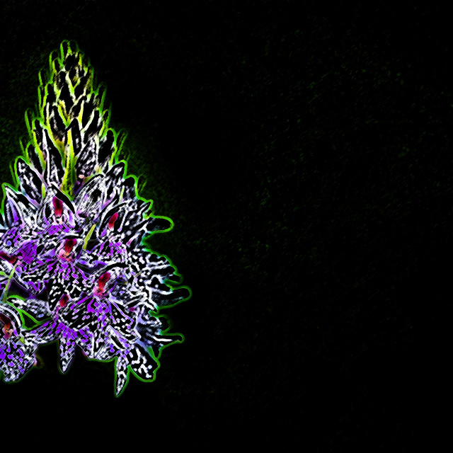 """""""Spotted orchid"""" stock image"""