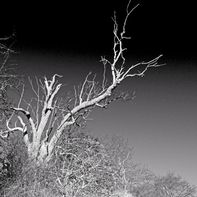 """Lightning Tree"" stock image"