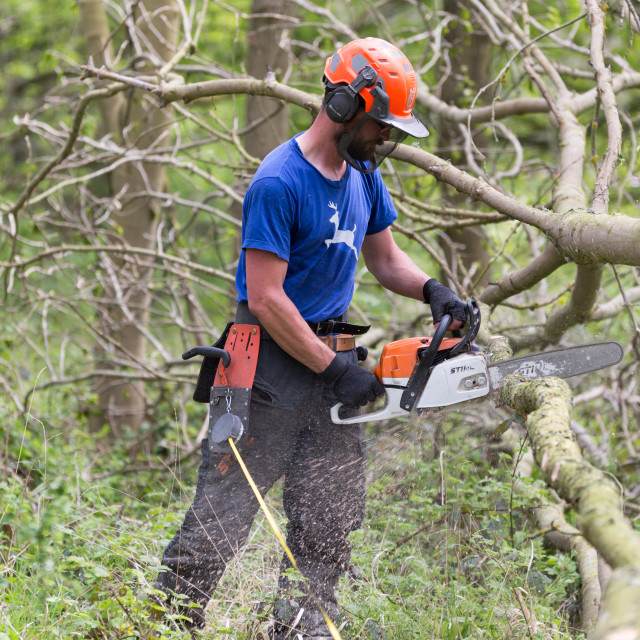 """Male tree surgeon cuts a felled tree"" stock image"