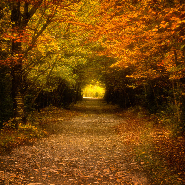 """Autumn in the forest"" stock image"
