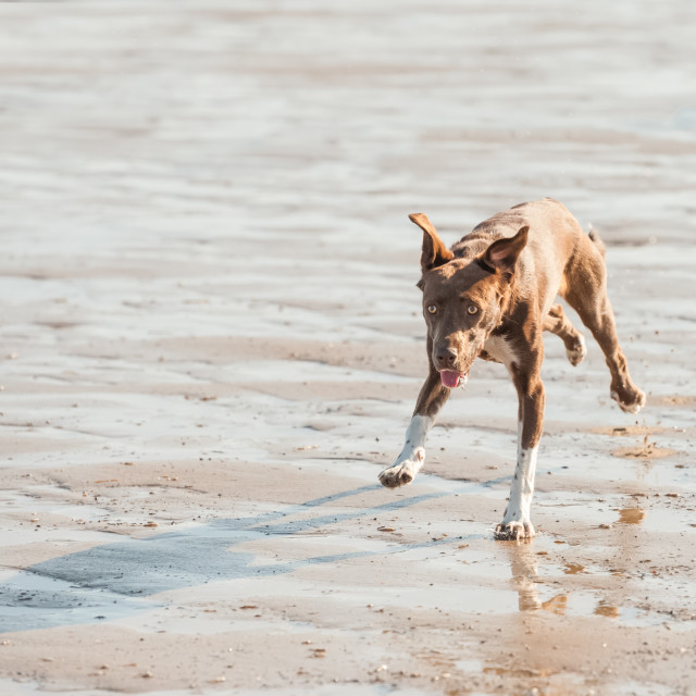 """crazy beach dog"" stock image"