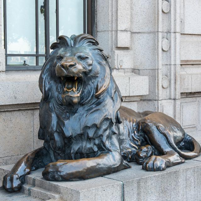 """Stephen The Lion."" stock image"