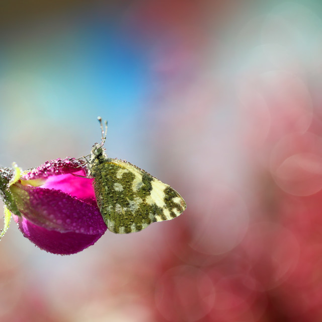 """Beautiful lonely butterfly"" stock image"