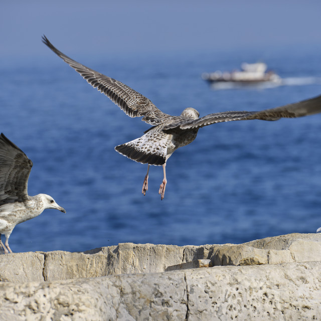 """Seagulls start flying"" stock image"