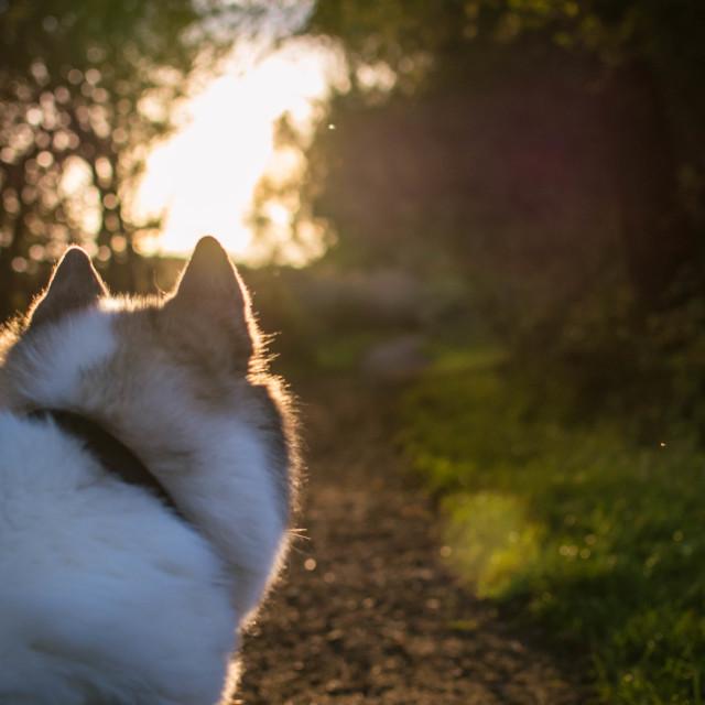 """""""Husky walk"""" stock image"""