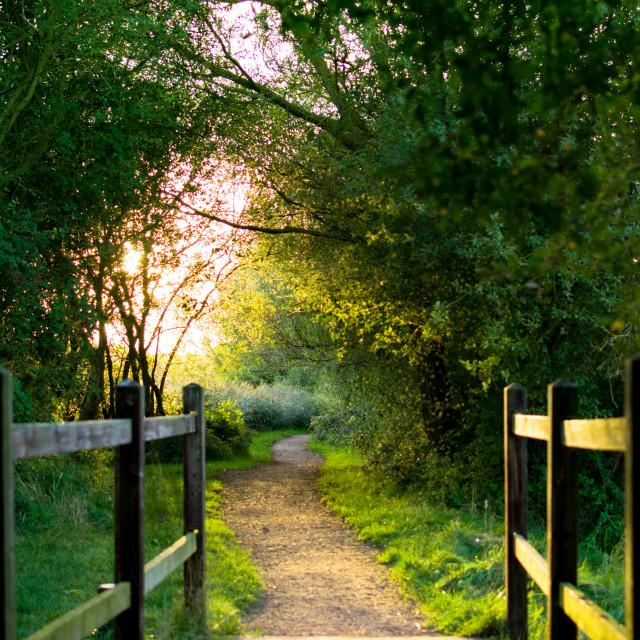 """Summer Walk"" stock image"
