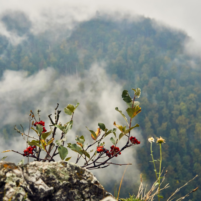 """""""Beautiful panoramic view of the Pieniny National Park, Poland, in rainy and foggy september day"""" stock image"""