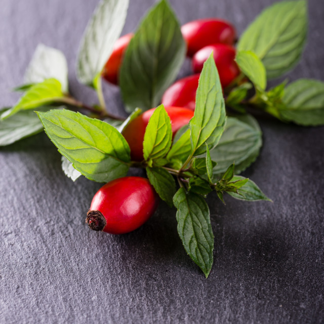 """""""Group of red hips with green leaves on black stone"""" stock image"""
