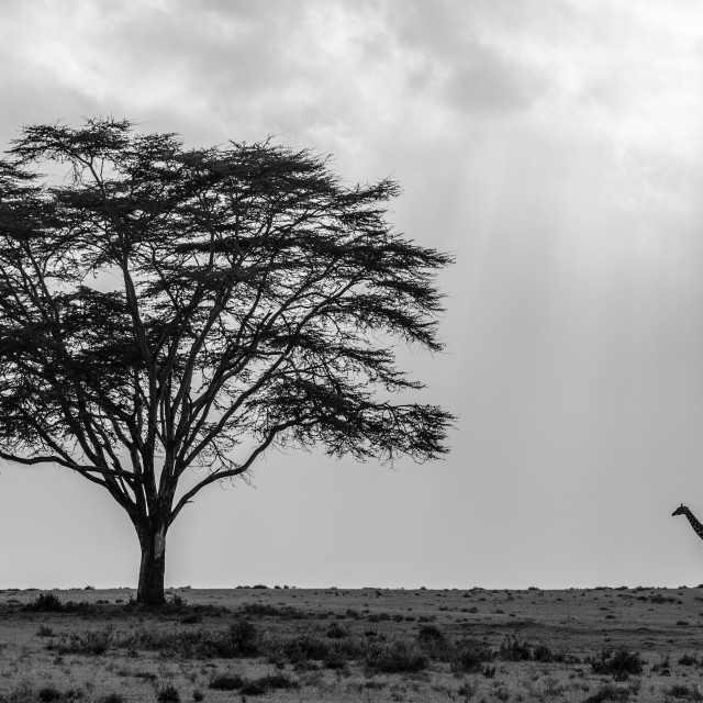 """Africa in Black and White"" stock image"