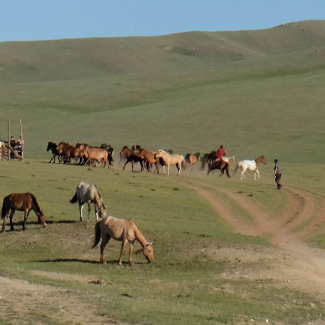 """""""Rounding up horses -Mongolia"""" stock image"""