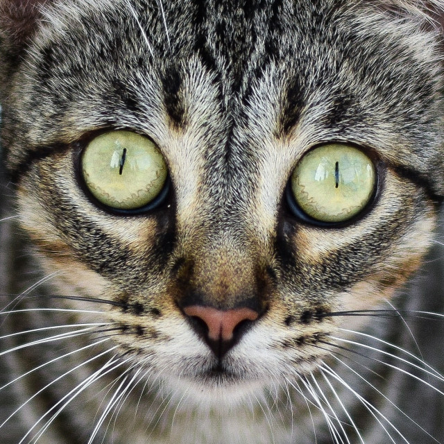 """Cats eyes"" stock image"