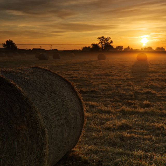 """In The Round- sunrise over a misty field with round bales"" stock image"