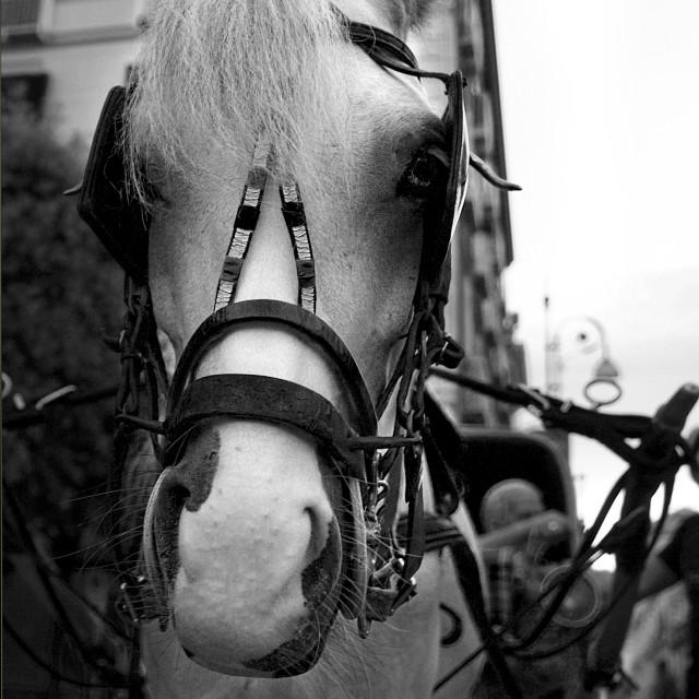 """horse"" stock image"