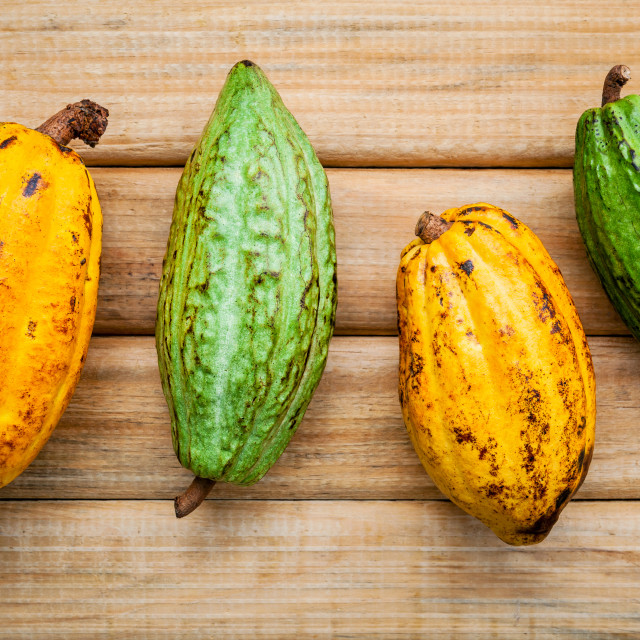 """Ripe Indonesia's cocoa pod setup on rustic wooden background."" stock image"