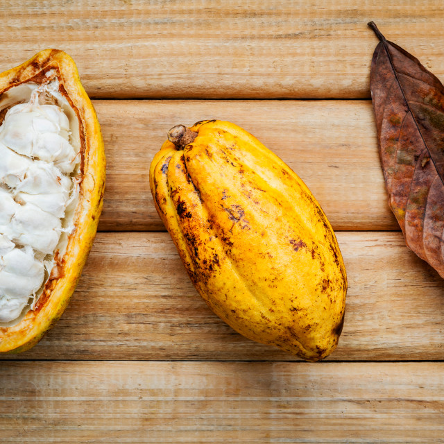 """""""Ripe Indonesia cocoa setup on rustic wooden background."""" stock image"""
