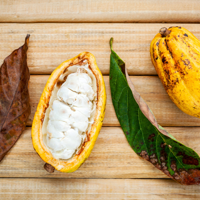 """""""Ripe Indonesia cocoa and cocoa leaves setup on rustic wooden background."""" stock image"""