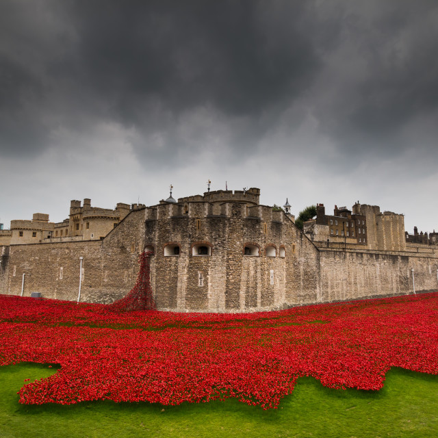 """""""Poppies at the Tower of London"""" stock image"""