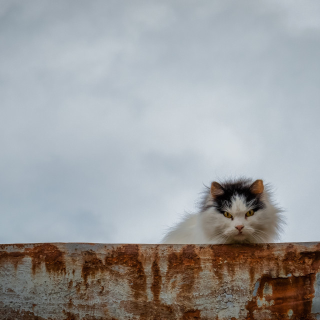 """""""Angry cat"""" stock image"""