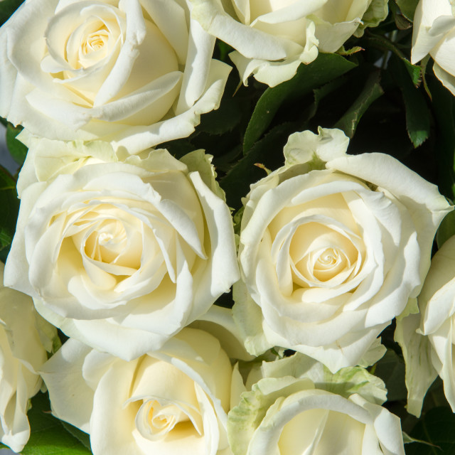 """White roses at wedding"" stock image"