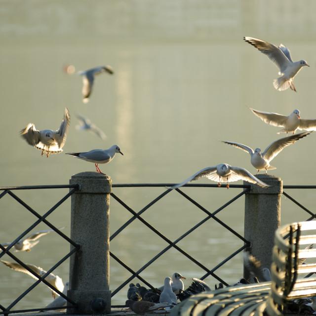 """""""Gulls"""" stock image"""