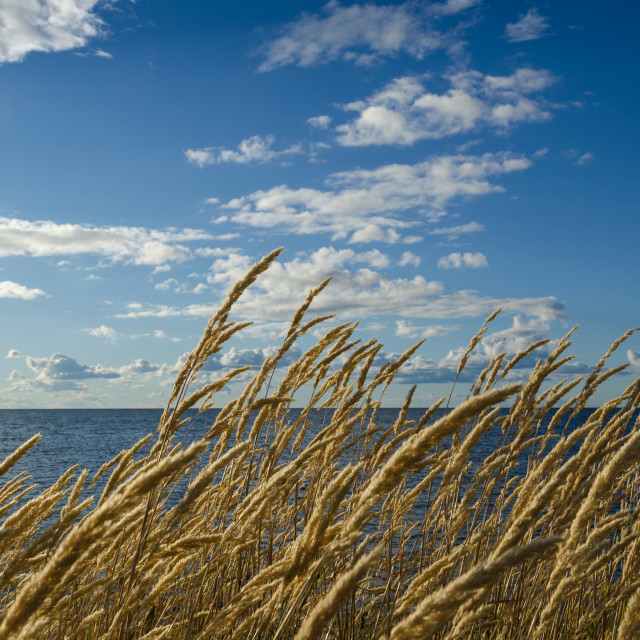 """""""Grass straws by the coast"""" stock image"""
