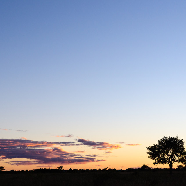"""""""Tree silhouette by twilight"""" stock image"""