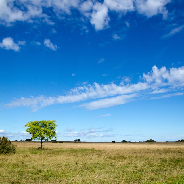 """""""Wide summer landscape"""" stock image"""