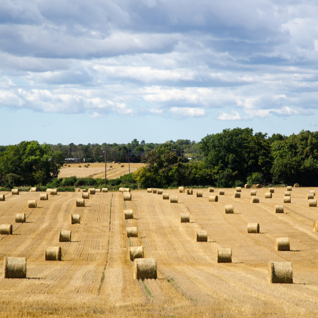 """""""Round strawbales in a field"""" stock image"""