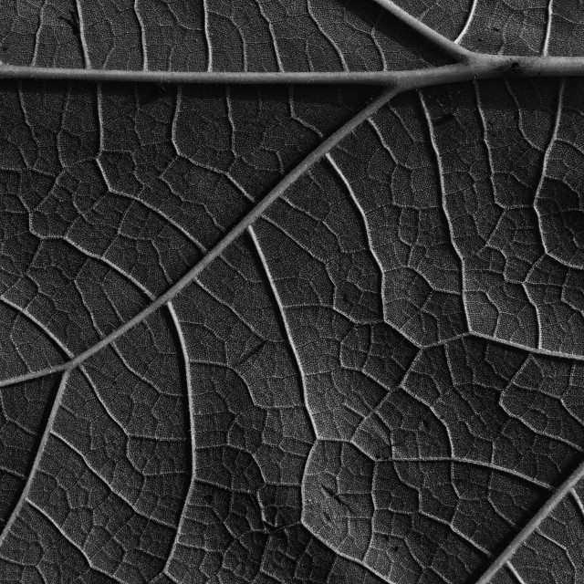 """""""Leaf abstract background and texture"""" stock image"""