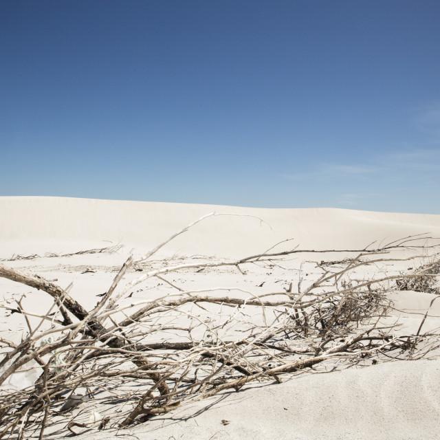 """""""Arid Beach Scene"""" stock image"""