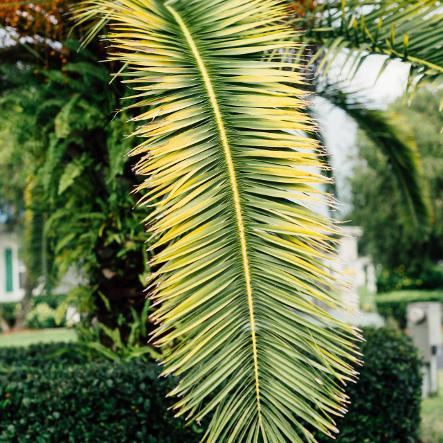"""Bright palm leaves"" stock image"