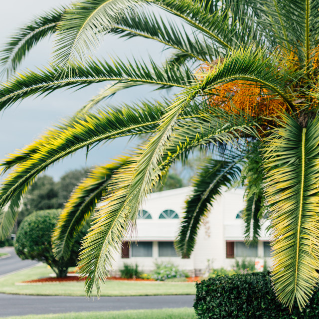 """Palm Tree Beauty"" stock image"