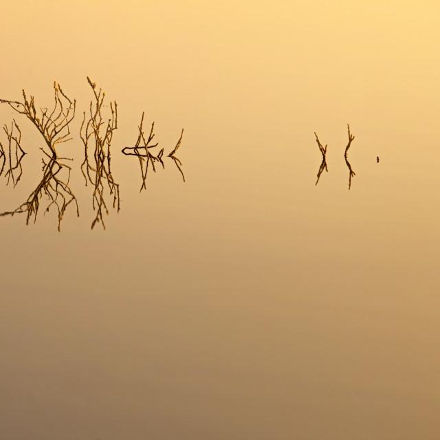 """""""Lake at the sunrise"""" stock image"""
