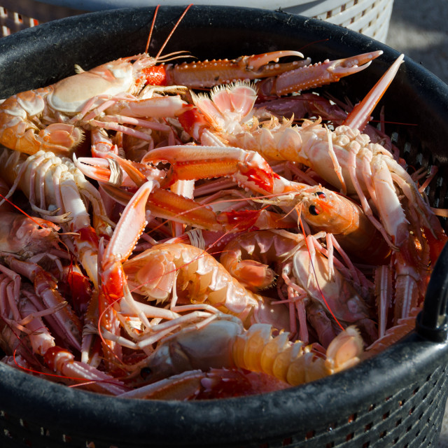 """""""one basket full of norway lobster"""" stock image"""