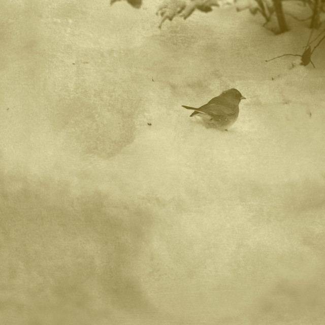 """Small Bird in Winter"" stock image"