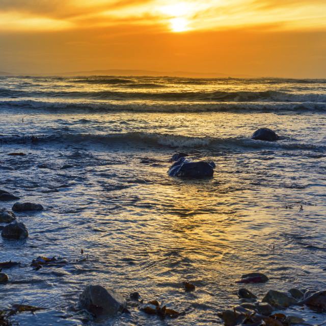 """kelp at rocky beal beach"" stock image"