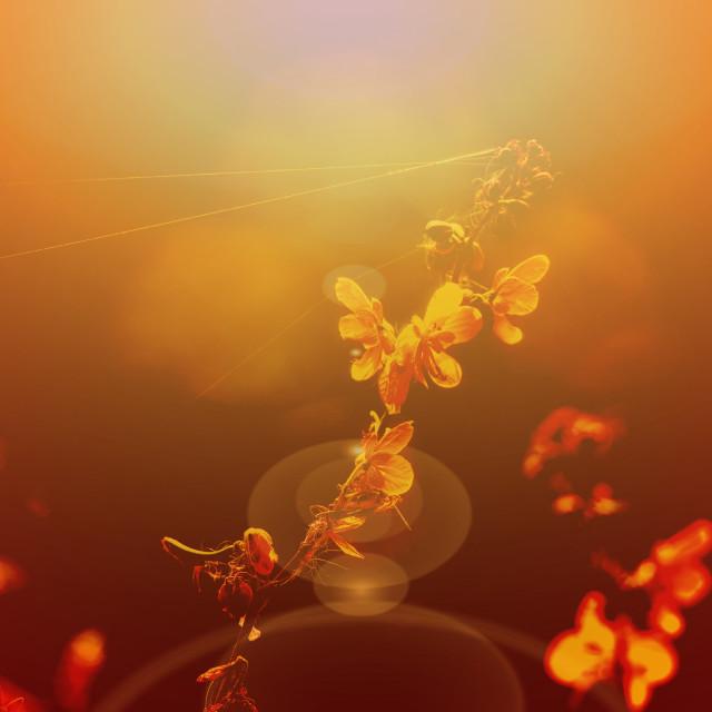 """""""Flowers at sunrise"""" stock image"""