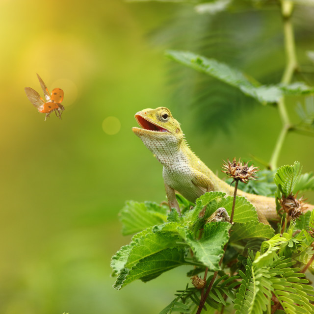 """The garden lizzard"" stock image"