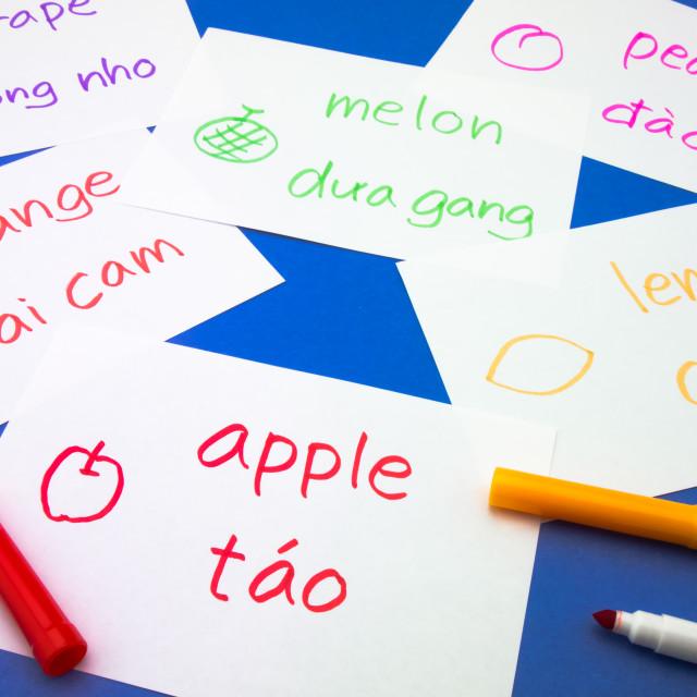 """""""Making Language Flash Cards; Vietnamese"""" stock image"""
