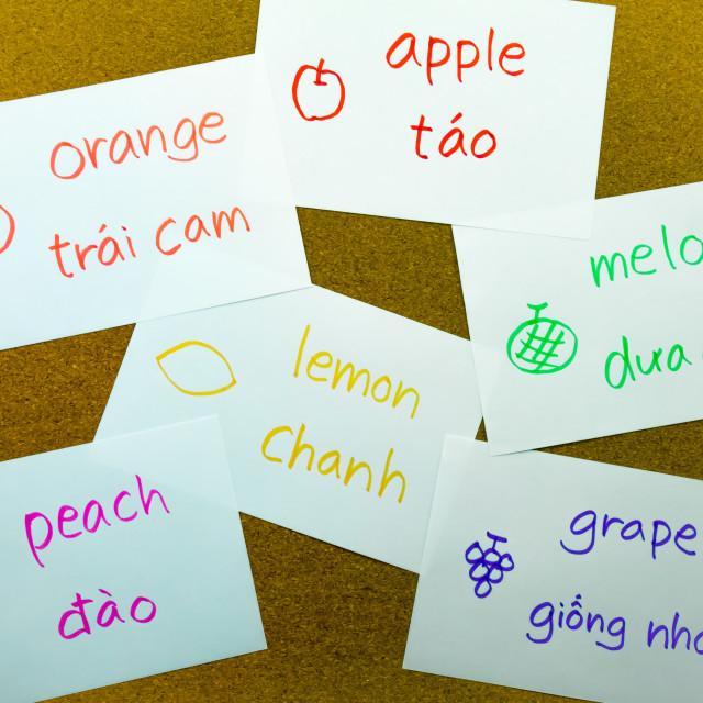 """Language Flash Cards; Vietnamese"" stock image"